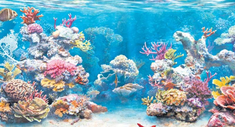 insula de corali