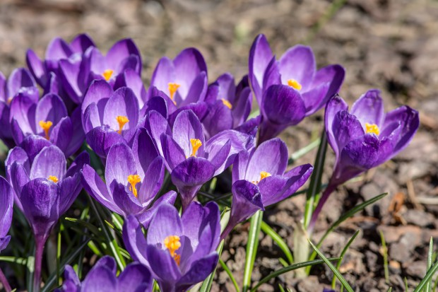 5 Flori De Primăvară Pentru O Grădină De Vis Lifestyle
