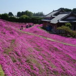 A Husband Spent Two Years Planting Thousands Of Flowers For His Blind Wife To Smell