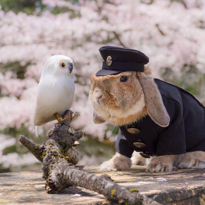Meet the world's most stylish bunny: