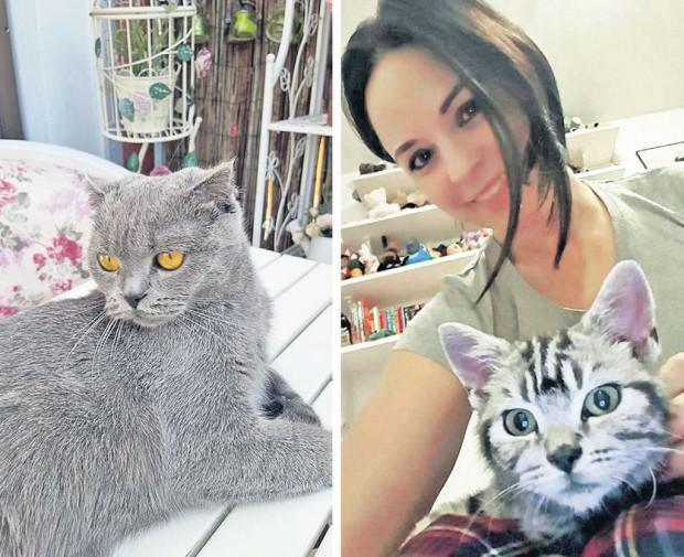 Ele sunt Fistic și Tigruța, pisicile vedetei... andreea marin Andreea Marin este DEVASTATĂ. Ce i-au făcut maidanezii