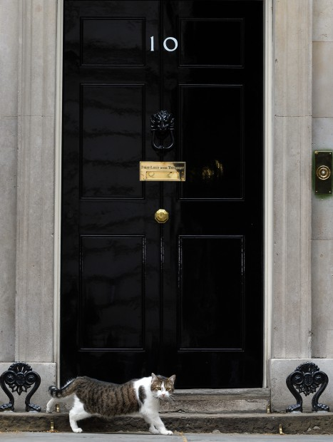 Motanul Larry, Downing Street - EPA