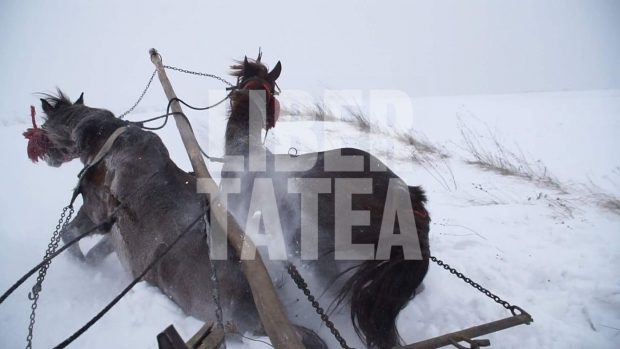 Un sat din Botoșani a fost izolat de zăpadă