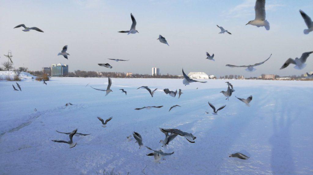 Lacul Tăbăcărie din Constanța a înghețat
