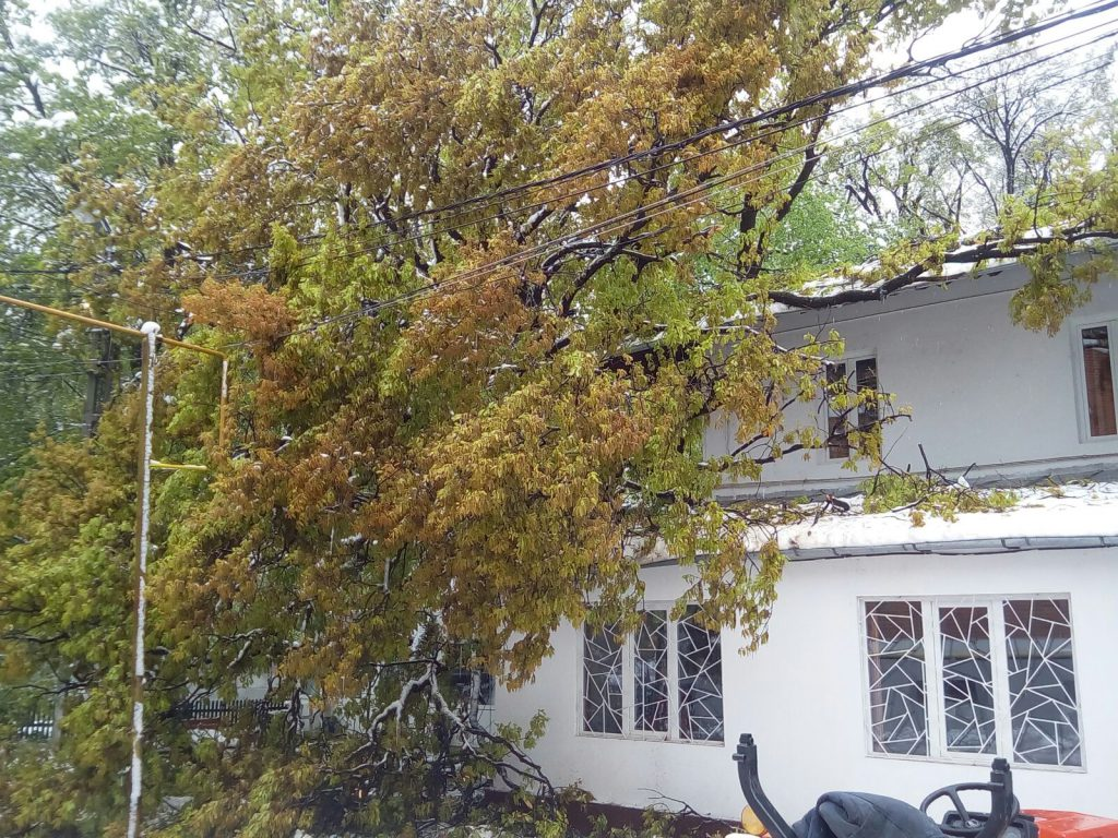 copac prabusit la spitalul voila din Campina (1)