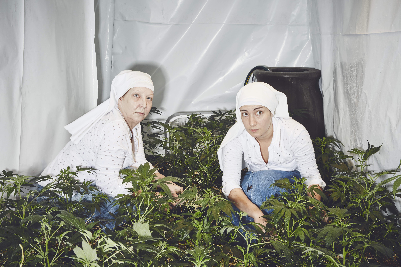 """Ordinul """"călugărițelor"""" care cresc și vând marijuana. Povestea """"măicuțelor"""" din California"""