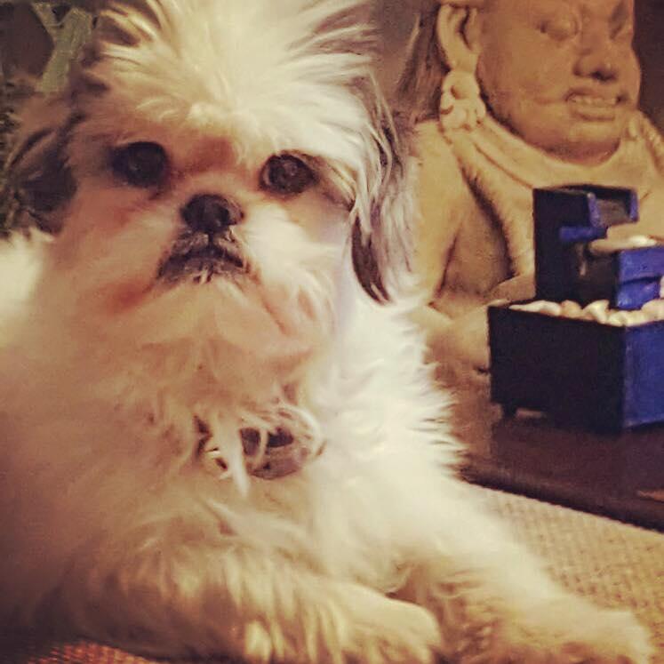 EXCLUSIV/ Dana Săvuică se pregătește de nuntă! Blonda își însoară… câinele