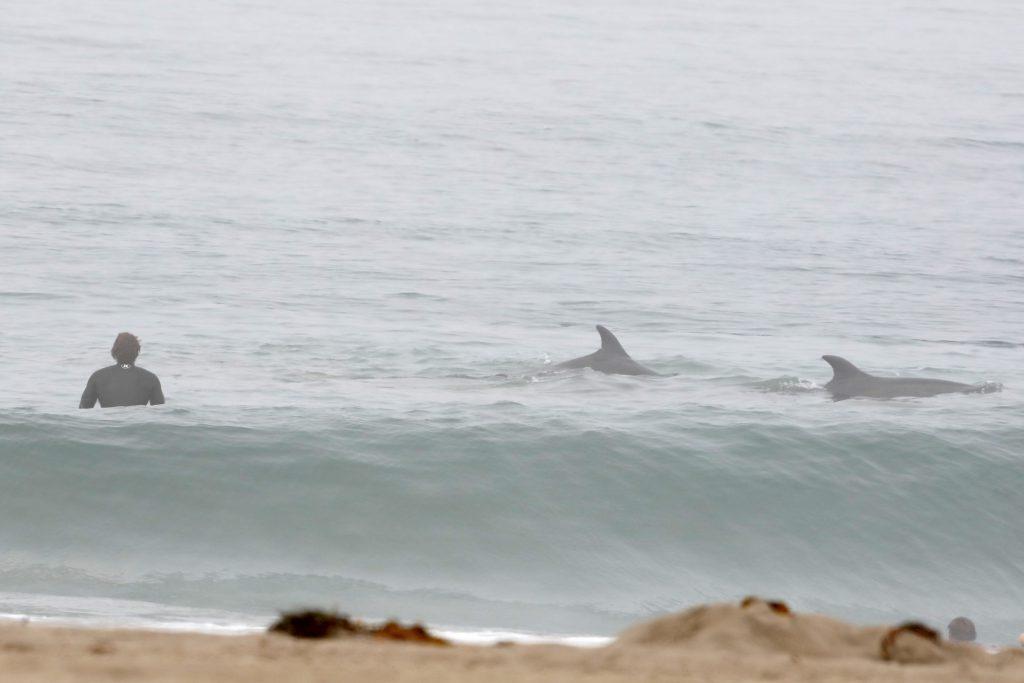 FOTO| Liam Hemsworth,la bustul gol, după ce a făcut surf cu delfinii
