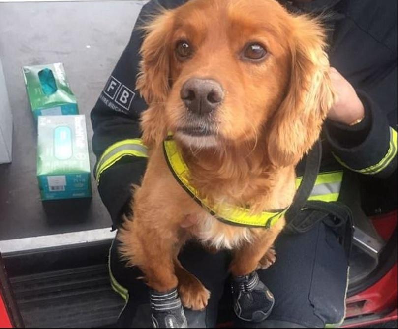 Incendiul de la Grenfell Tower | Pompierii caută victimele cu ajutorul câinilor. Patrupedele, echipate cu pantofi speciali