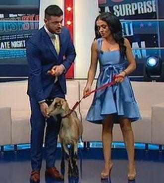 Andreea Mantea a primit o capră de la Bianca Drăgușanu.  Cum a reacționat bruneta când a văzut-o pe Vasilica