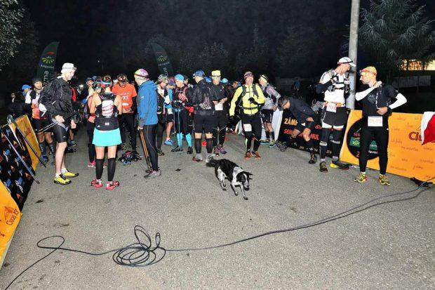 Probabil cea mai frumoasă și emoționantă poveste a anului! O cățelușă maidaneză s-a ținut după maratoniști și a alergat 105 kilometri prin munți! La finalul cursei era epuizată, dar a fost adoptată!