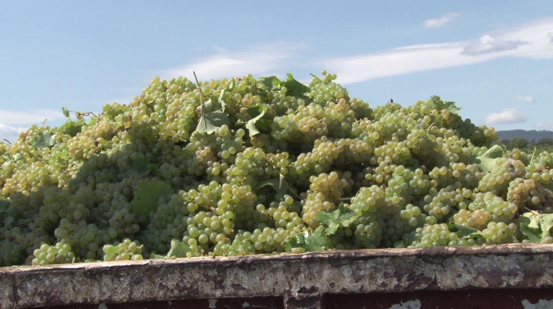 vinurile românești