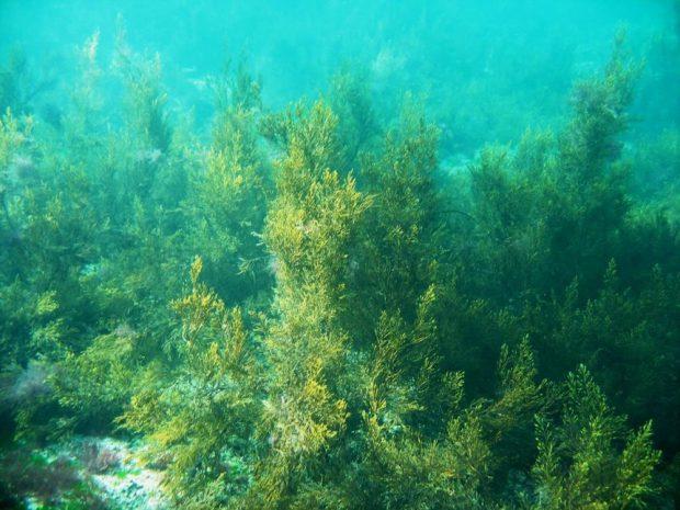 Algele pot opri infecțiile intraspitalicești. Descoperire revoluționară a cercetătorilor români de la Marea Neagră