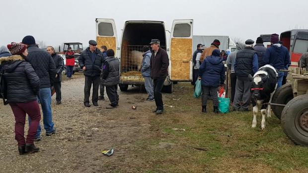 VIDEO/Europa ne taie porcii înainte de Ignat. Cel mai vechi târg de animale s-a închis