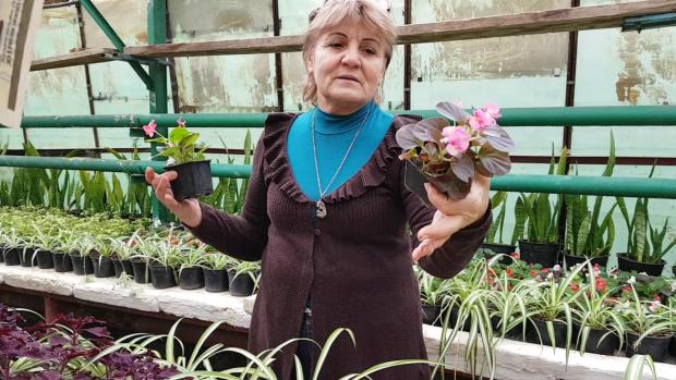 Elena Pintileasa este supranumită mama florilor din Bucureşti fiindcă de 50 de ani se ocupă de plantele decorative