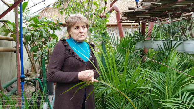 Elena Pintileasa se asigură că fiecare floare se dezvoltă corespunzător
