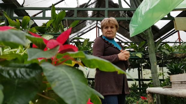 În cele 6 sere administrate de Elena Pintileasa sunt sute de mii de flori