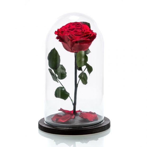 cadouri de dragobete. trandafiri criogenati in dar de dragobete