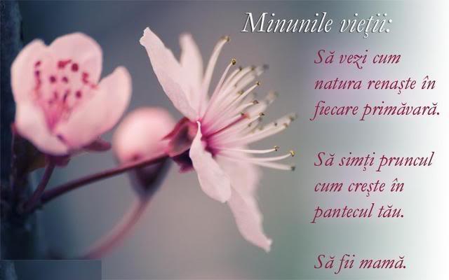 Felicitare de 8 martie- Text cu urare pentru mama alături de magnolii înflorite