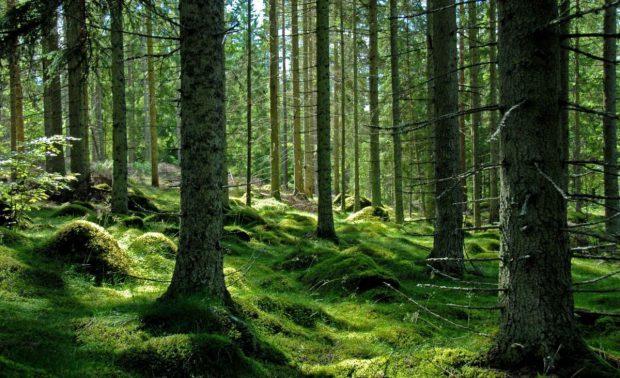 Pădurile virgine ale României au declanșat un război în Parlament. Riscăm declanşarea unei proceduri de infringement