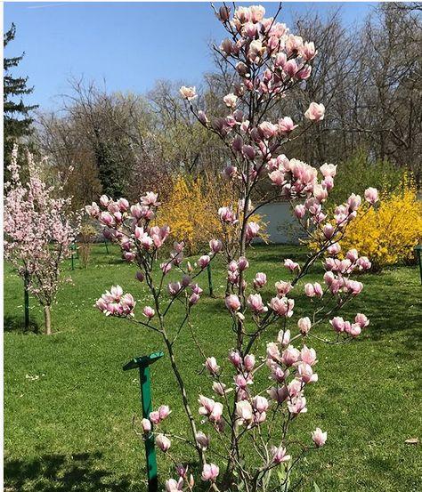 Ce s-a întâmplat cu magnolia primită de Principesa Margareta de ziua de naștere, în urmă cu nouă ani. A fost cadou de la Cătălin Măruță