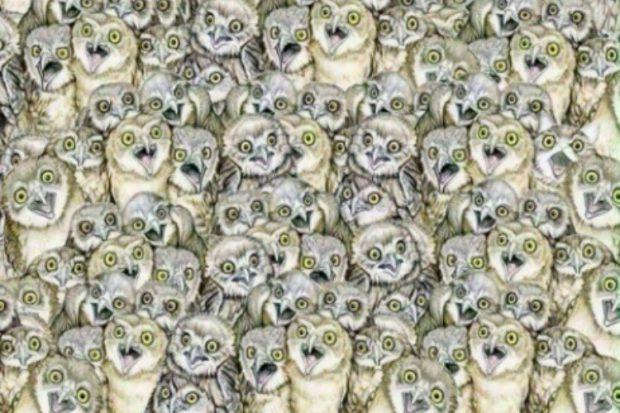 Găsește pisica din fotografie (foto tiphero.com)