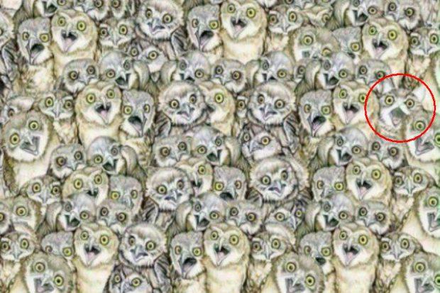 FOTO   Găsește pisica din fotografie! E mai greu decât crezi