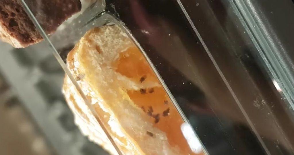Insecte în produse de patiserie la hipermarket. Asta a găsit o cântăreață de muzică populară la cumpărături | VIDEO