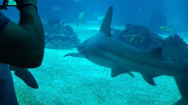 În bazinul central al Oceanariului din Lisabona, unul dintre cele mai mari din lume, înoată rechini, pisici de mare şi mii de specii de peşti