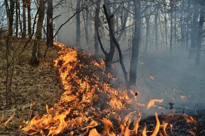 Incendiu de pădure în judeţul Olt, august 2017/ Foto: Gazeta de Olt
