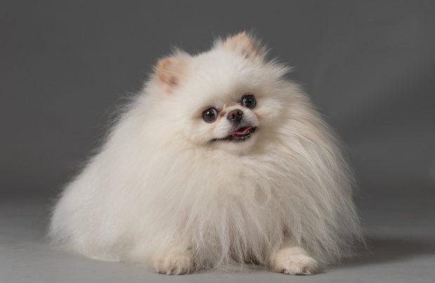 Unul dintre câinii fotografiați în studio de Tina