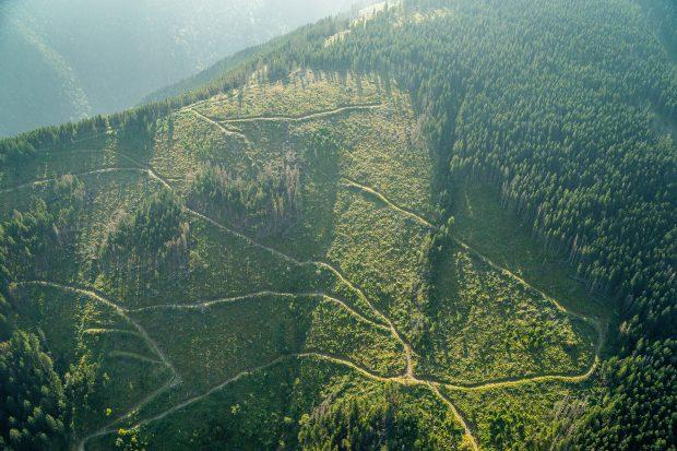 """Liber la defrișări! Toporul UDMR din Parlament: """"Nu afectăm natura dacă tăiem câteva hectare"""""""