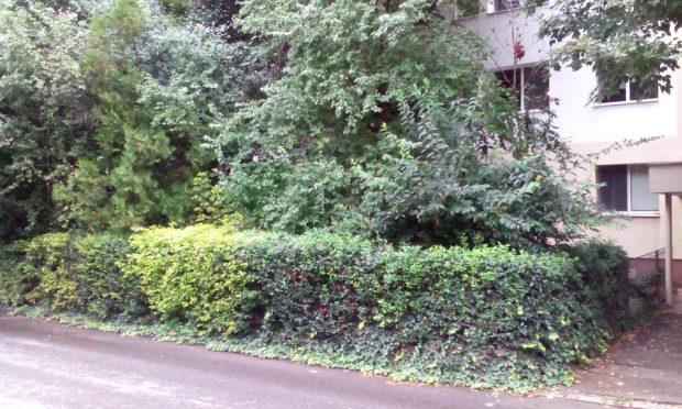 Spatiu verde bd. Camil Ressu bloc N5