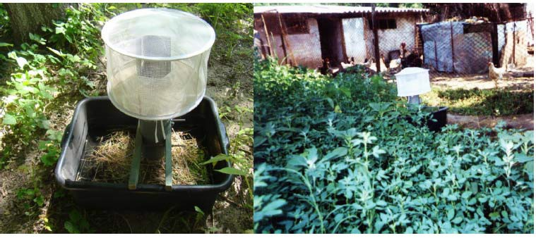 Specialiștii avertizează: ploile favorizează înmulțirea țânțarilor, stropirea cu insecticide trebuie făcută mai des. Cum prevenim infecția cu virusul West Nile