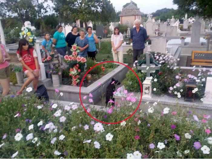 Un câine a fost îngropat de viu într-un cavou din cimitir. Groparii din Sannicolau Mare au pus placa de beton peste el