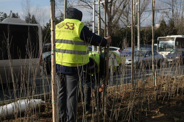 Copacii de 200.000 de euro au început să se usuce