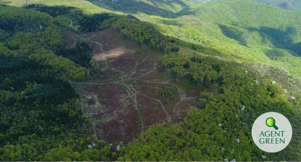 """Tăieri """"legale"""" dintr-un parc național. Imagine de sus cu păduri"""