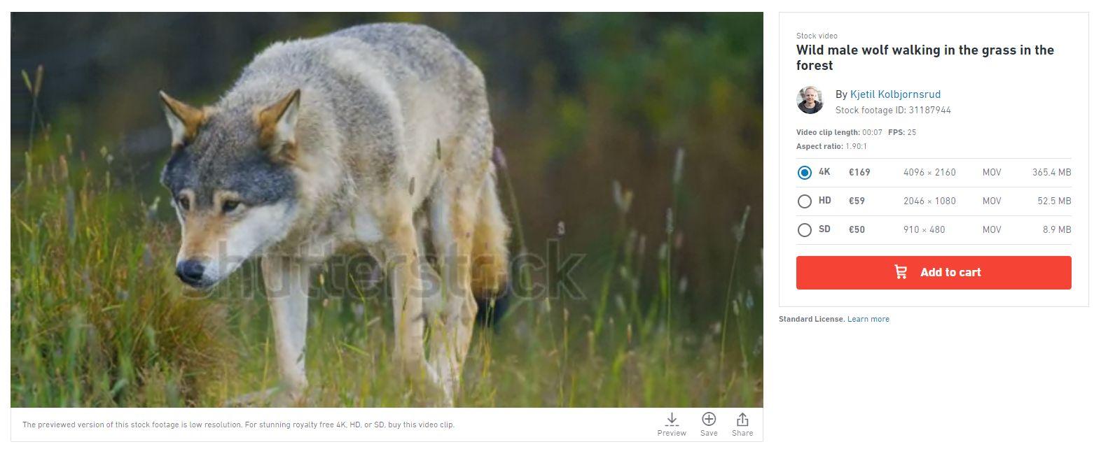 Lupii din filmul oficial de prezentare a României sunt de fapt din Norvegia! Pe site-ul sursă, imaginile costă între 50 și 169 de euro