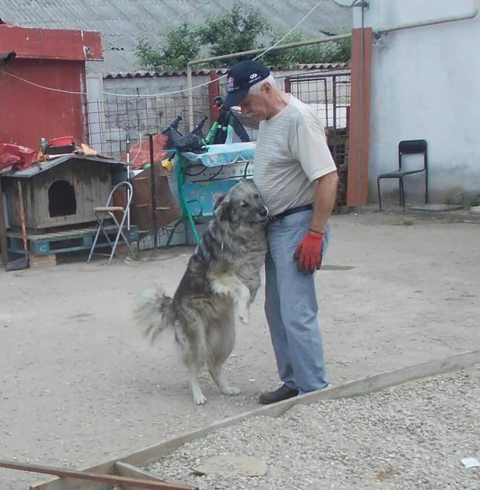 """Codin Maticiuc, impresionat de povestea unui bătrân care se ocupă de un adăpost pentru animale. """"Nu e înstărit și bolnav de inimă pe deasupra"""""""