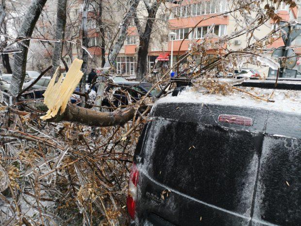 FOTO   Vremea face ravagii: Zeci de copaci doborâţi de vânt și gheață în Bucureşti și 49 de maşini avariate, în ultimele ore. Circulaţia pe anumite linii a tramvaielor şi a troleibuzelor, blocată