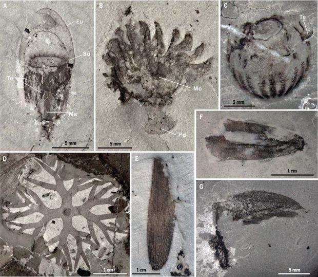 FOTO   Descoperire uluitoare în China: fosile cu o vechime de 518 milioane de ani pe malul unui râu!