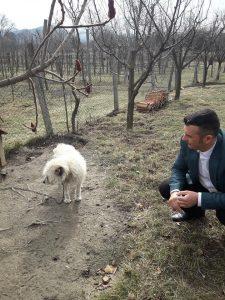"""Ce spune viceprimarul din Vlădești, filmat trăgând un câine cu mașina. """"Din păcate, o faptă bună a fost interpretată greșit"""""""