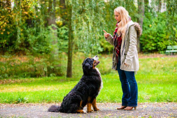 Dresaj canin - femeie care isi dreseaza cainele