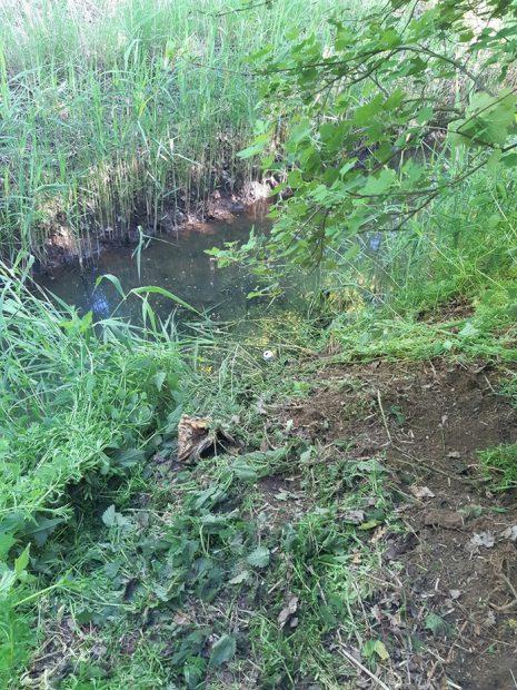 Locul unde a fost prins românul de câinele polițist olandez