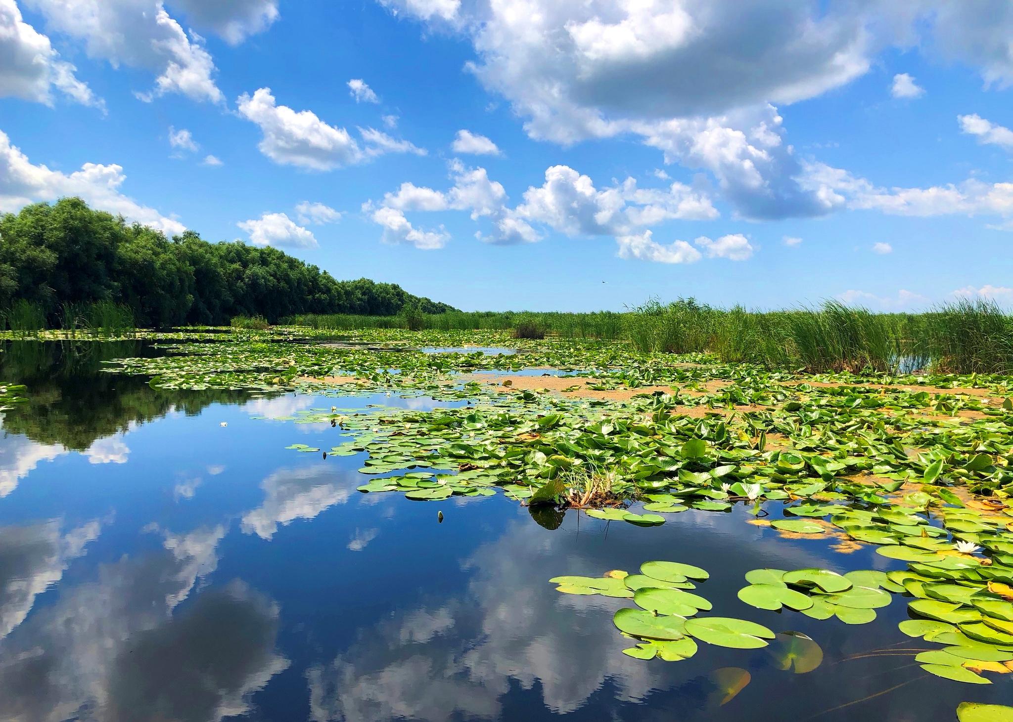 Ofertă Specială Plătește 1 și Merg 3 în Delta Dunării! (PUBLICITATE)    Libertatea