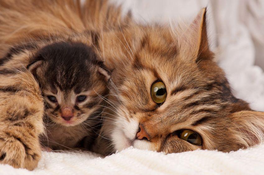 8 August - ziua internațională a pisicii