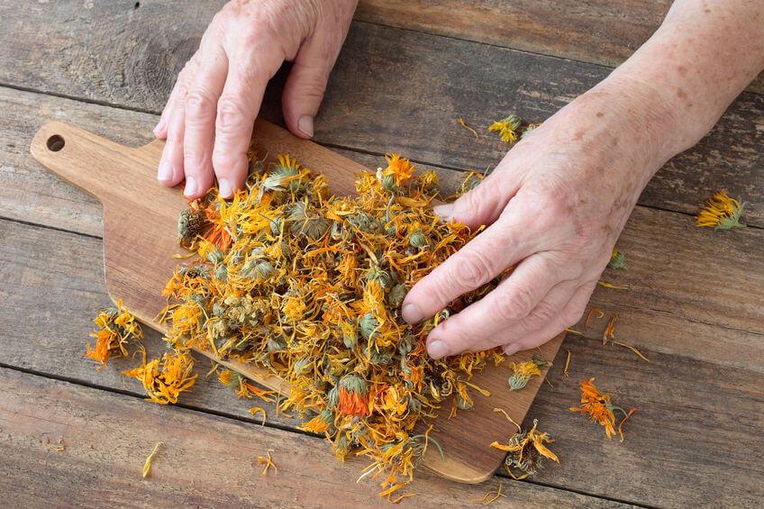 Flori de gălbenele uscate pentru prepararea ceaiului de gălbenele