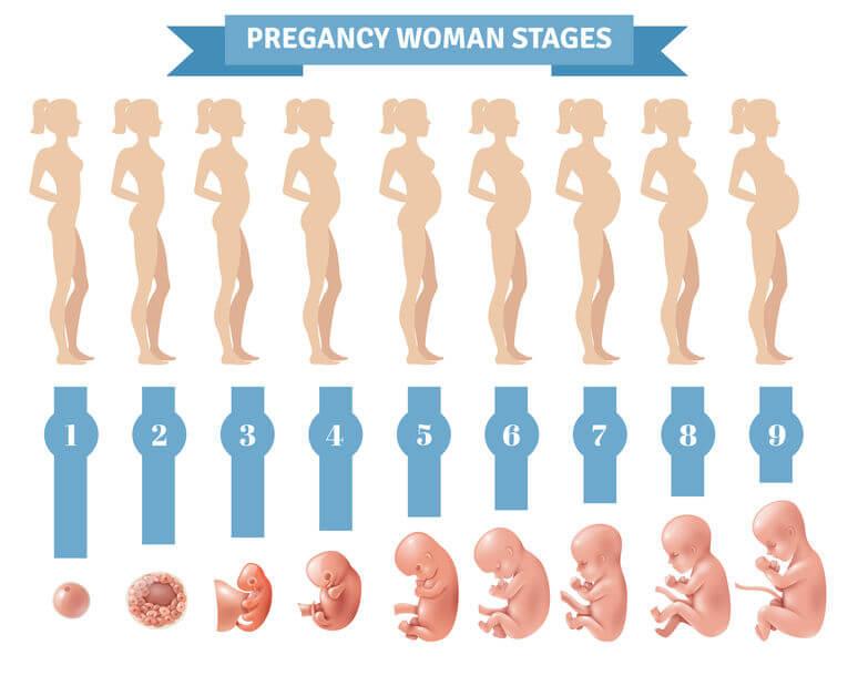 Sarcina pe săptămâni - cum evoluează fătul și corpul viitoarei mămici