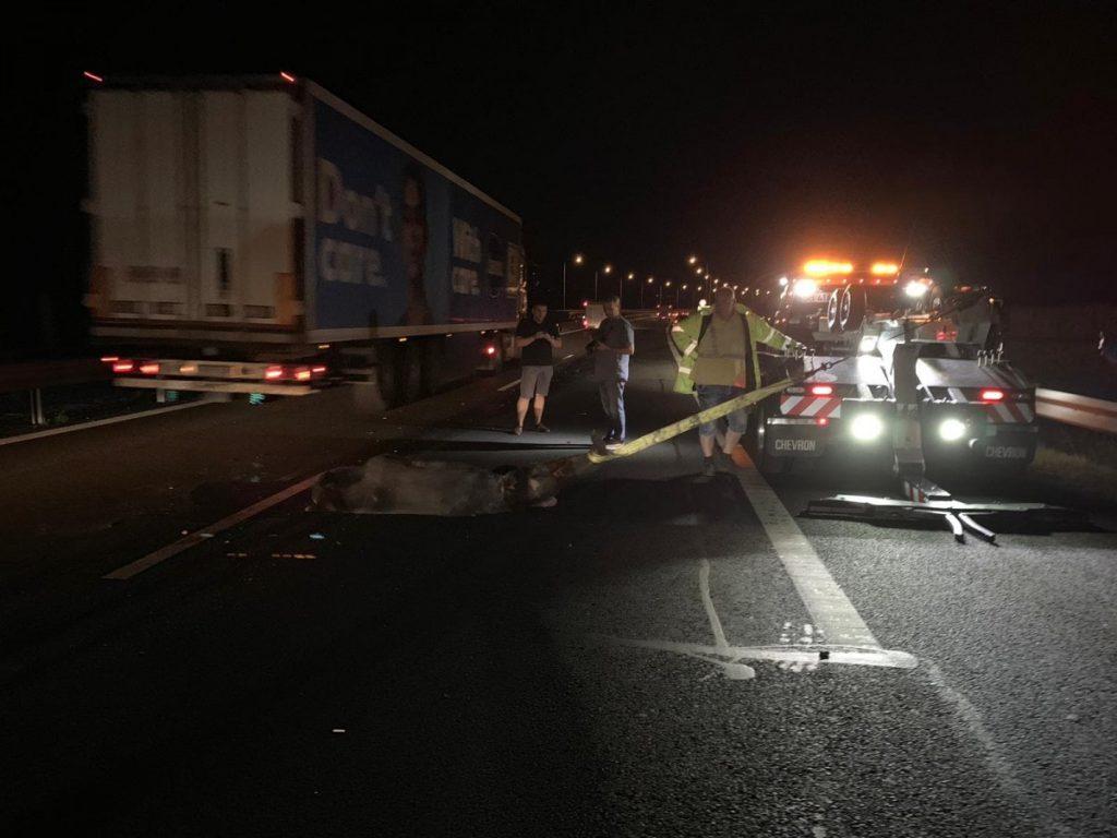Négy autó ütközött egy medvével az autópályán
