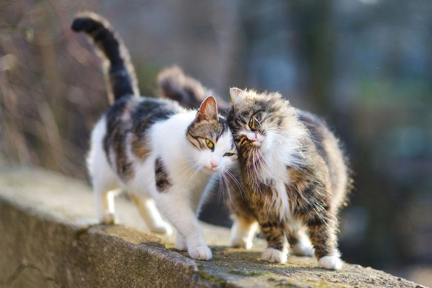 Ziua internațională a pisicii - cel mai popular animal de companie